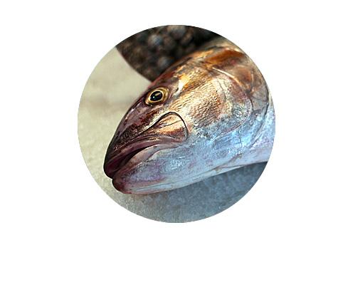 poisson_frais